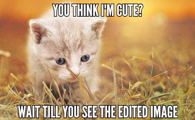 cat meme hero